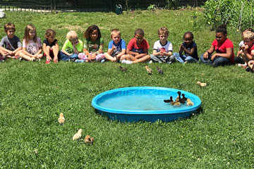 Group of students watching chicks and ducklings swimming in a baby pool